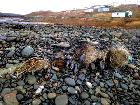 Marine plastics in Newfoundland look like macro plastics because coasts are rocky and microplastics disappear.