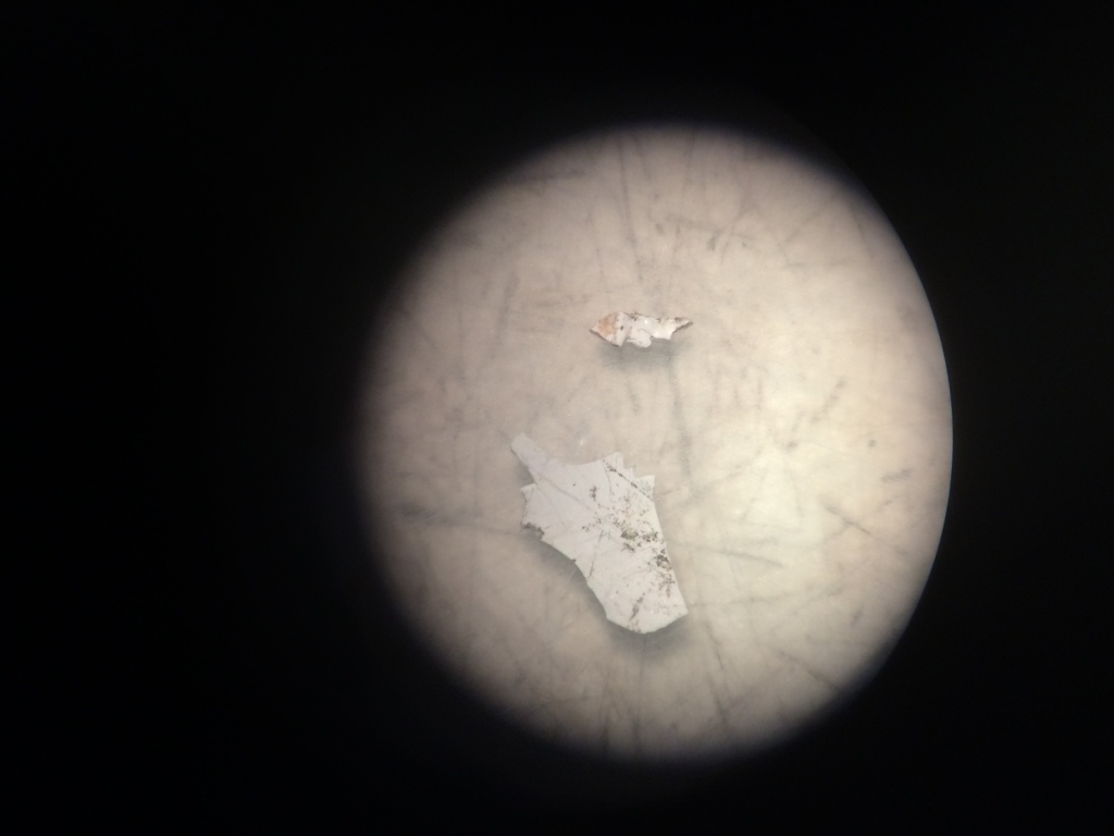 Photograph via a microscope of one of the pieces of plastic found in a cod fish. Image credit: Emily Wells.