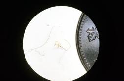 microfibers
